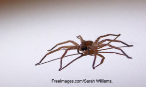 huntsman-spider-1388614-638x418
